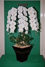 Winning Orchids, LLC